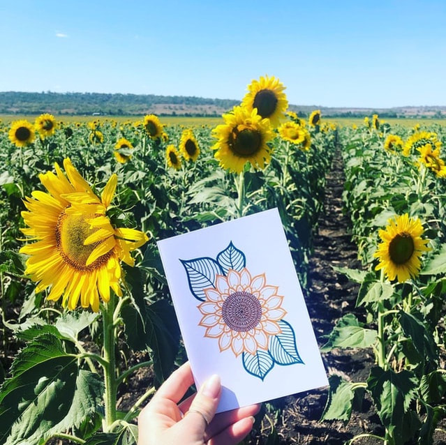 Field of sunflowers in Allora, Queensland which has inspired the creation of our sunflower gift cards